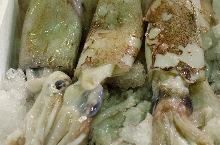 calamari esteri - consorzio sapere